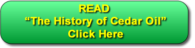 Read about the history of cedar oil